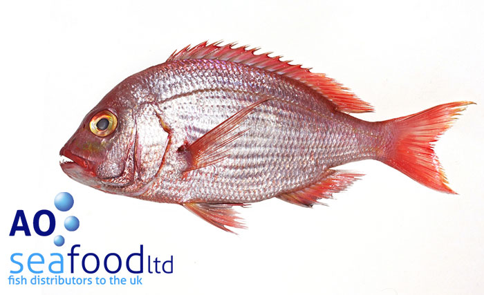 Red snapper ao seafood delivery for Red snapper fishing