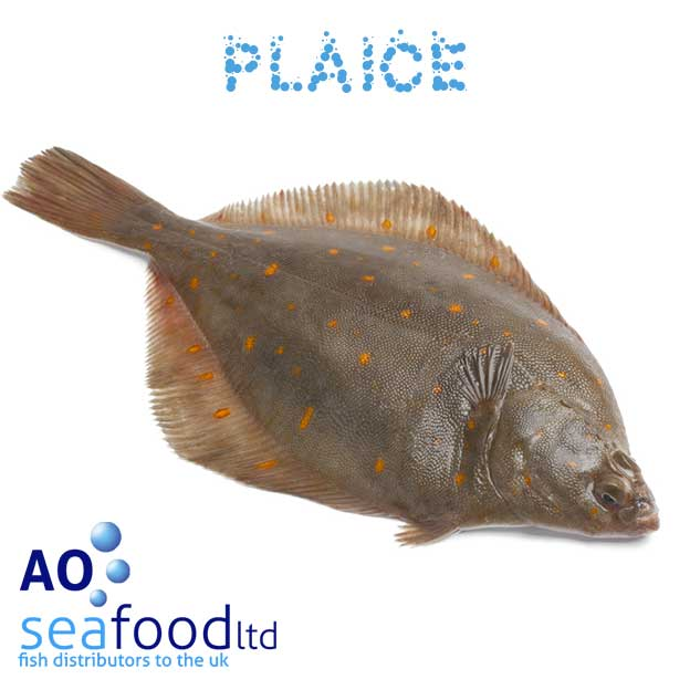 Buy plaice fillets order fresh plaice fish online for The fish place