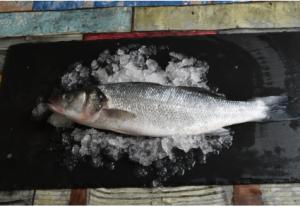 Fresh Mediterranean Sea Bass