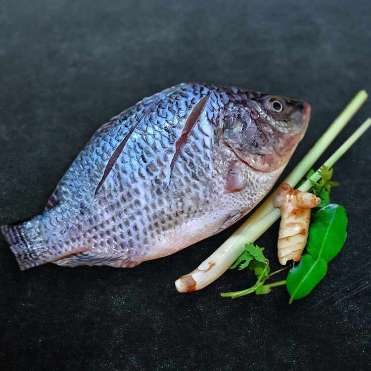 Tilapia Fillet Ao Seafood Delivery